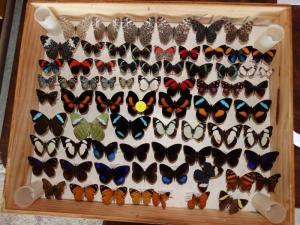 HardwickButterflies