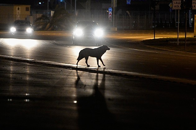 https://i2.wp.com/wac.450f.edgecastcdn.net/80450F/kool1079.com/files/2014/04/466569787-Dog-Crossing-Street-at-Night_-Pascal-Le-Segretain-Getty-e1398724533539.jpg