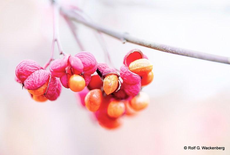 Herbst, Foto/Copyright: Rolf G. Wackenberg