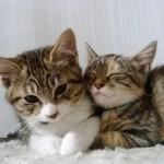 猫が子供を守る時の母猫に見られる母性本能と威嚇行為とは…