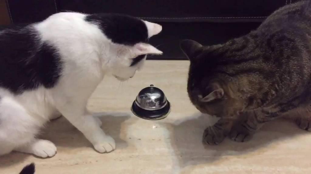 ベルを鳴らすとおやつがもらえる猫