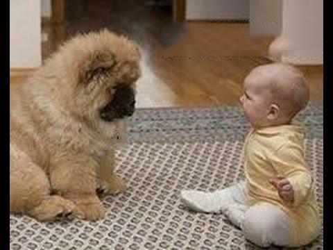 最高におもしろ犬と赤ちゃん 謎の会話動画特集・どっちも可愛すぎる