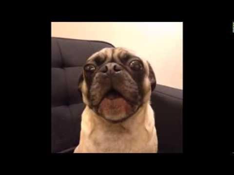 犬のおもしろい動画集