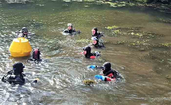 Wasserpest Taucher