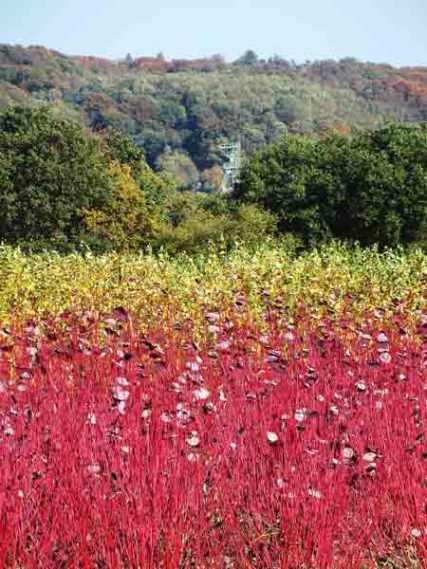 Herbst-aufgenommen-am-Hohen-Kreuz