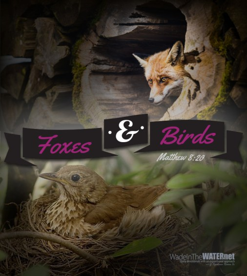 foxesbirds_post