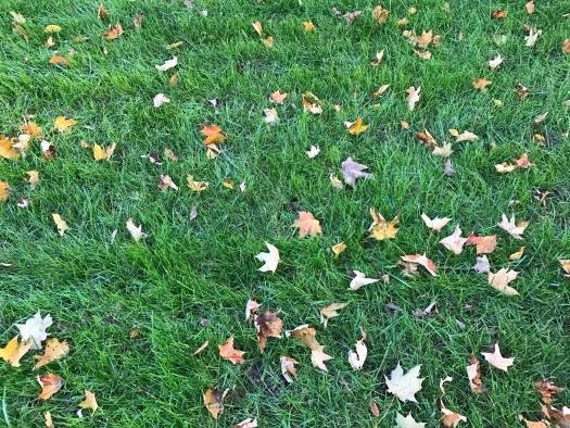 The lawn on October 31, 2016
