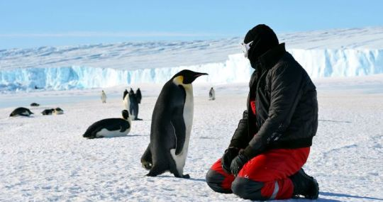 Pinguini suferind de caldura la Polul Sud.