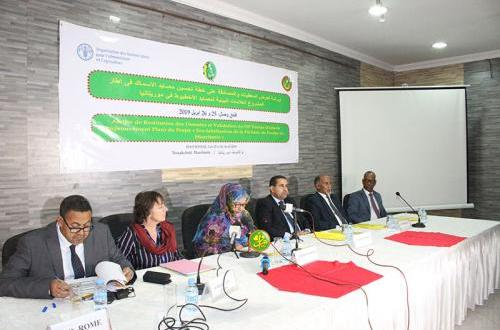 موريتانيا تبحث اعتماد العلامة التجارية للأخطبوط المحلي
