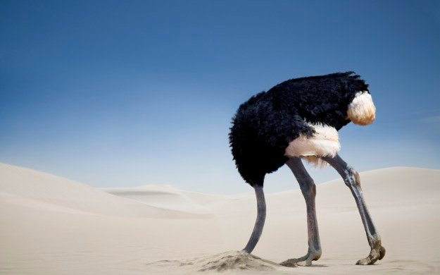 Image result for head in the sand ostrich