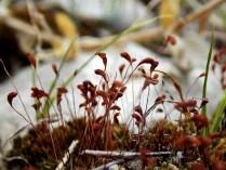 Undergrowth, Devonian Gorge, Corralville, IA