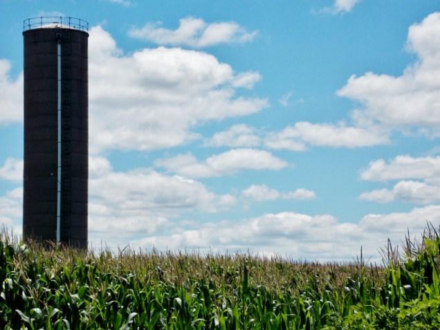 Corn-field, IA. Copyright Robert Hartwig.