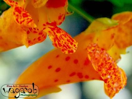 Que les fleurs restent toujours brillants et en forme.