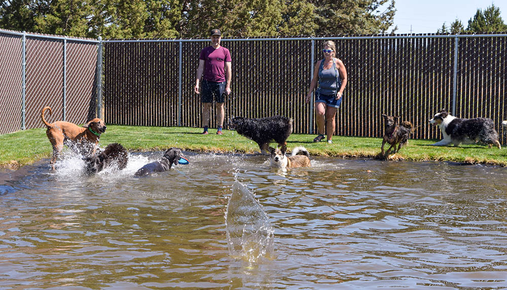 dogs in the pond at WB Ranch