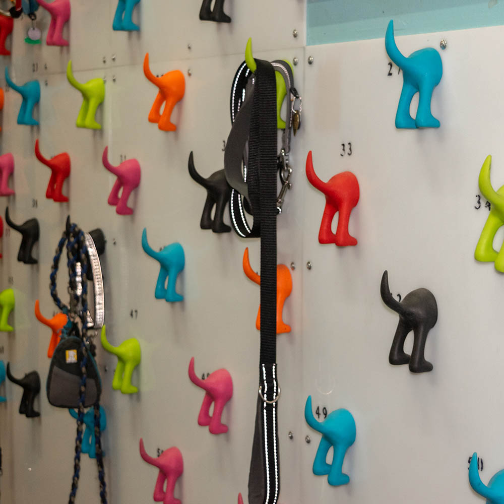 leash wall at wag bend