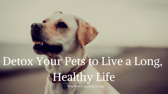Detox Your Pets To Live A Long, Heathy Life