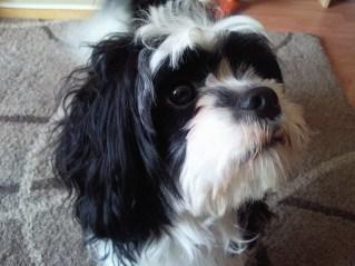 Alfie  Dog Has Died