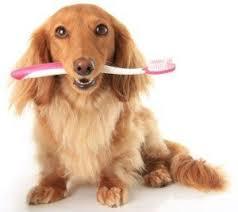 dachshund - Best Dog Owner