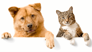 Pet Taxi, dogs and cats.