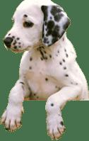 location-dog