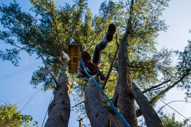 A Camp White Pine member ascends to a tree-sit.