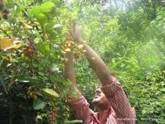 Kathmandu Kakani Jhor Hiking (41)