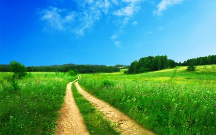organic home blog