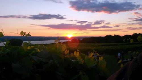 Sunset over the vineyard from the brewdeck