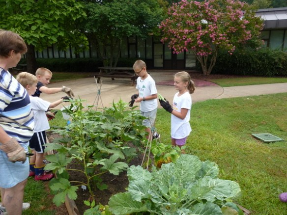 Harvesting produce from school gardens