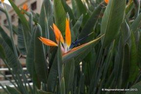 Bird of Paridise