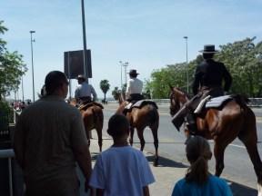 Sharing sidewalk with horses
