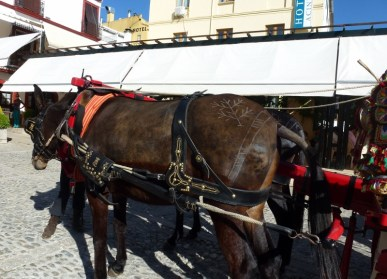 Ronda Spain - Markings on horse