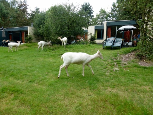 Center Parcs Het Meerdal Netherlands deer