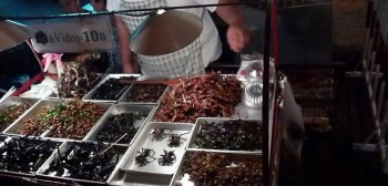 eating bugs in bangkok thailand