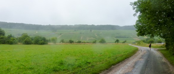 View of vineyards in Champagne