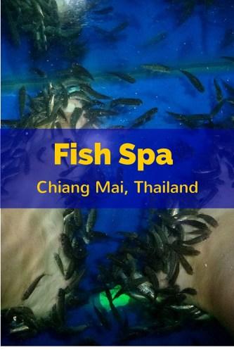 Fish Pedicure Fish Spa Chiang Mai Thailand. Read more on WagonersAbroad.com