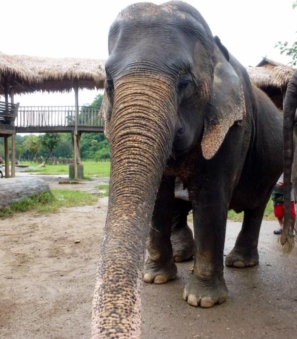 ElephanSave Elephant Foundation
