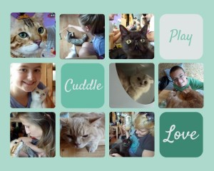 Cat cafe Chiang Mai - Catmosphere