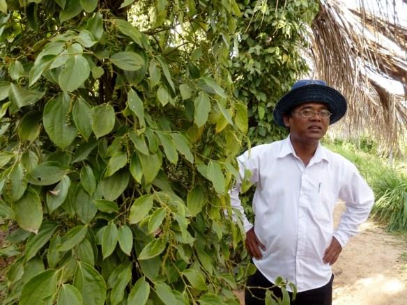 Sothy's Pepper Farm Kep Cambodia