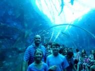 SEA-Aquariuam-Experience-11