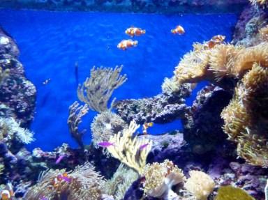 SEA-Aquarium-Experience-19