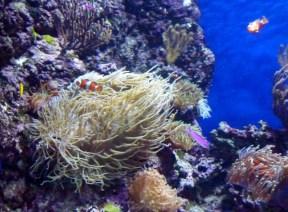 SEA-Aquarium-Experience-20