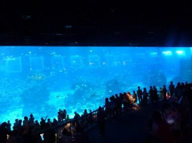 SEA-Aquarium-Experience-28