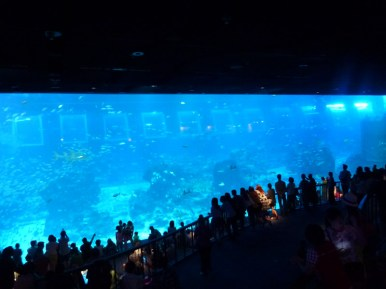 SEA-Aquarium-Experience-28