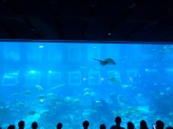 SEA-Aquarium-Experience-31