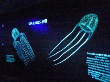 SEA-Aquarium-Experience-41