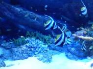 SEA-Aquarium-Experience-48