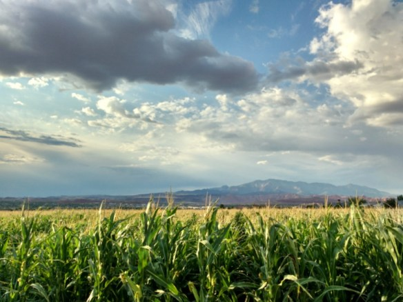 st. george utah corn fields