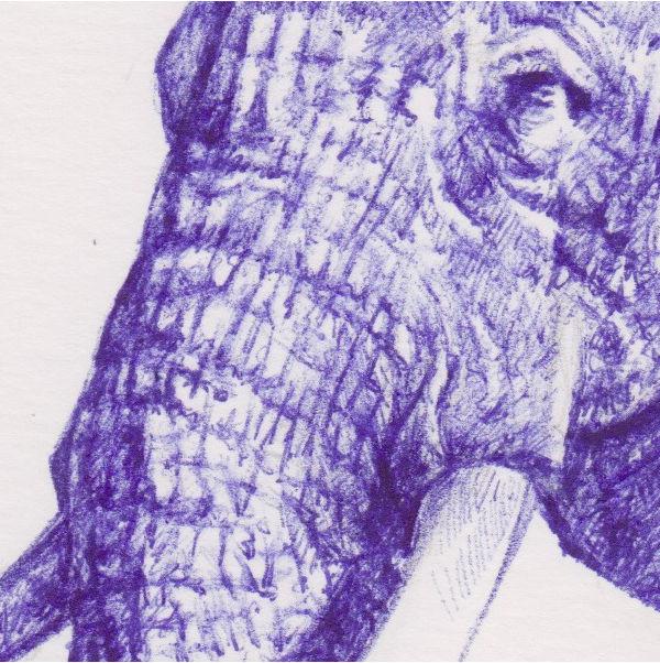 Trompe (elephant drawing detail)