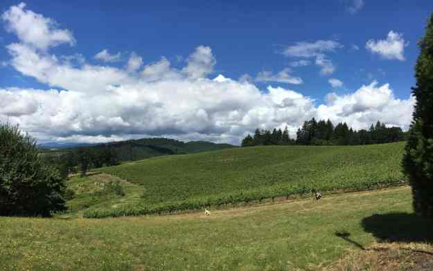 A business trip to Elk Cove Vineyard this past week. Always beautiful in wine country, however, this site stands above the rest.